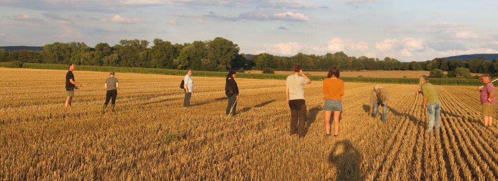 Menschen laufen über ein abgeerntetes Feld und suchen nach Feldhamsterbauen.