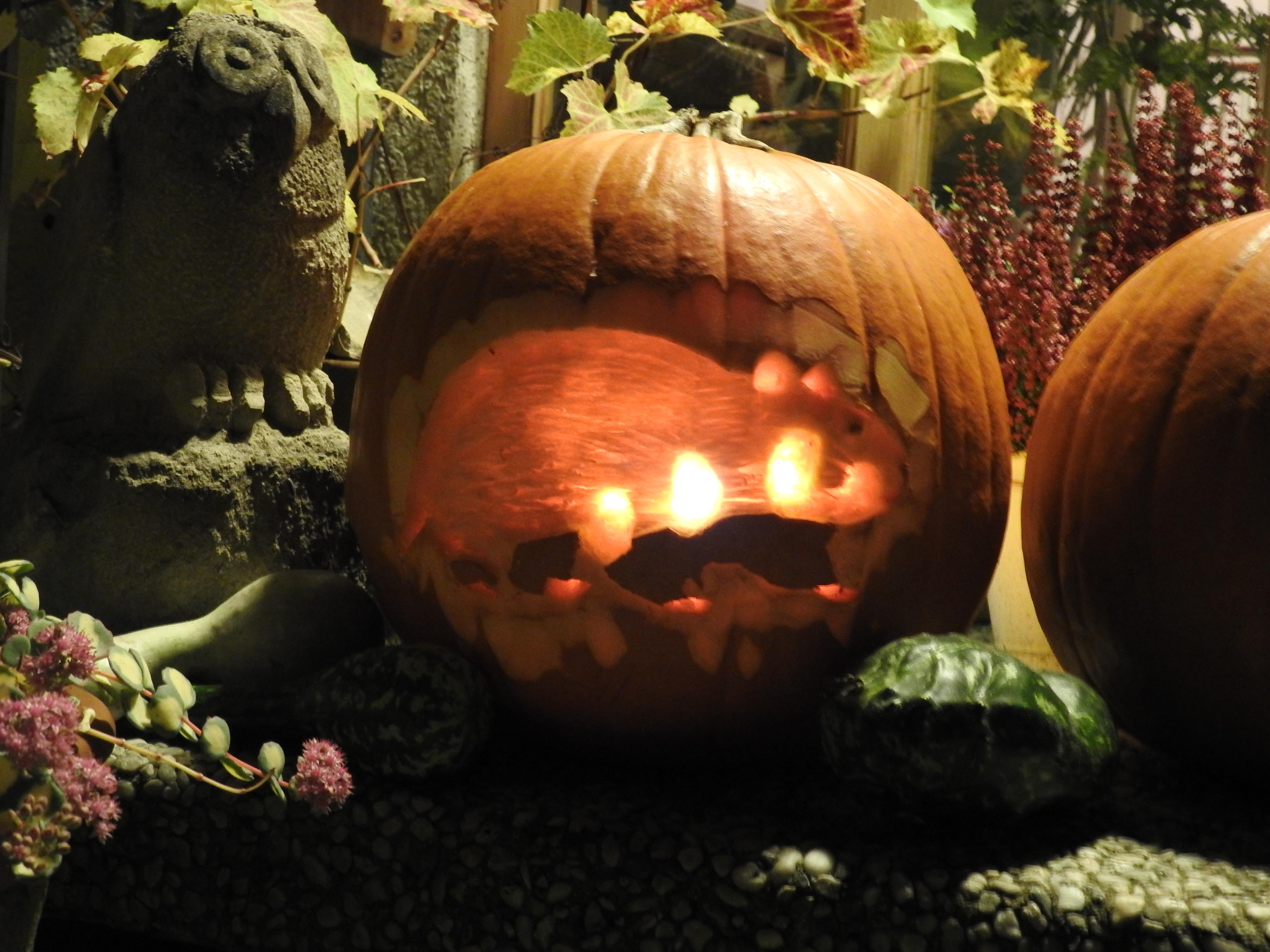 Halloweenkürbis mit Feldhamster