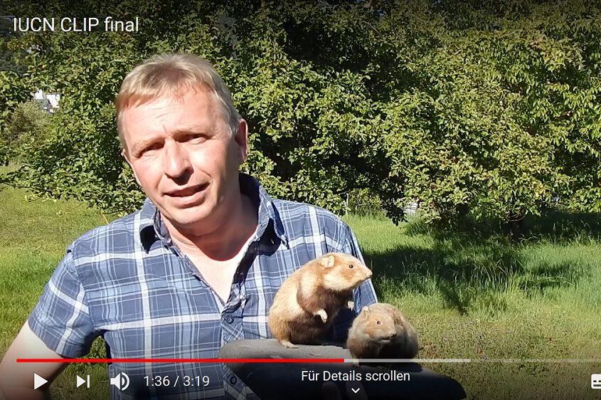Standbild Video, Feldhamsterexperte erläutert Rückgang des Feldhamsters